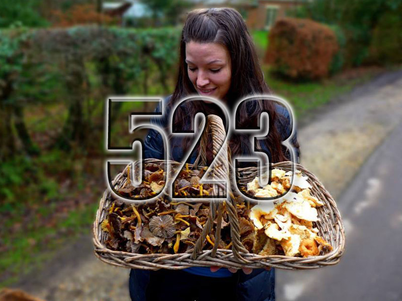 No 523 – Foraging with Edulis Wild Foods