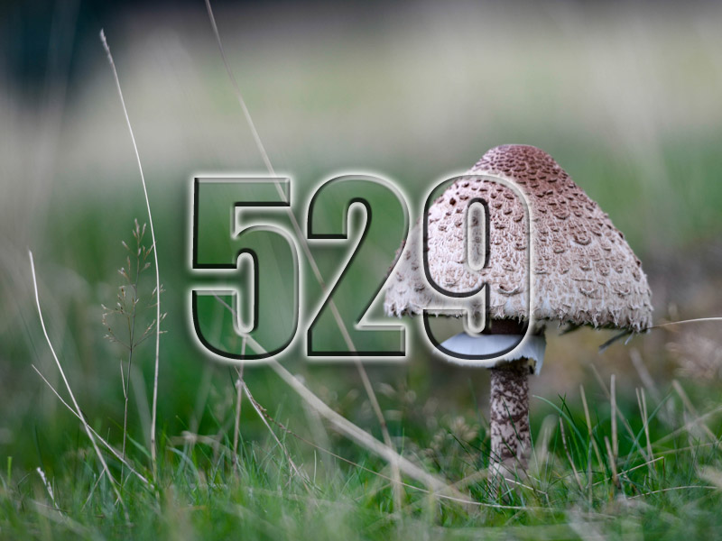 No 529 – Fungi and Foraging with Edulis Wild Food