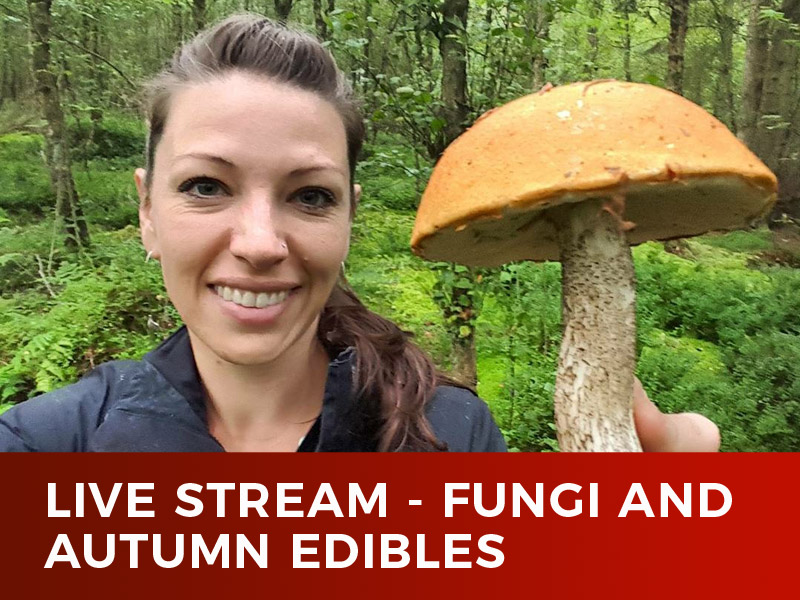 Live Stream – Fungi and Autumn Edibles